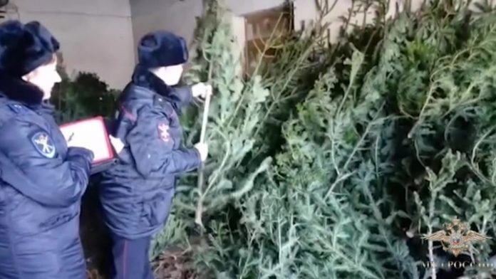 Kemerovo police detained the poacher's Christmas