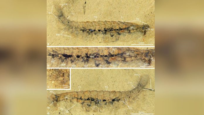 The crucial discovery? Discovered the fossil nervous system to age hundreds of millions of years