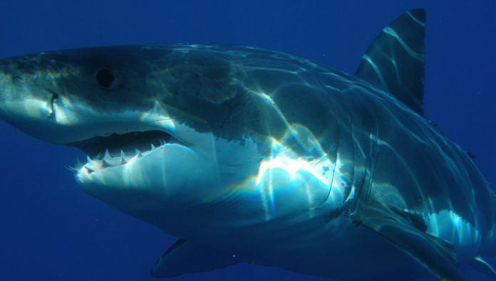 A shark killed a diver in the boat, in which were his girlfriend