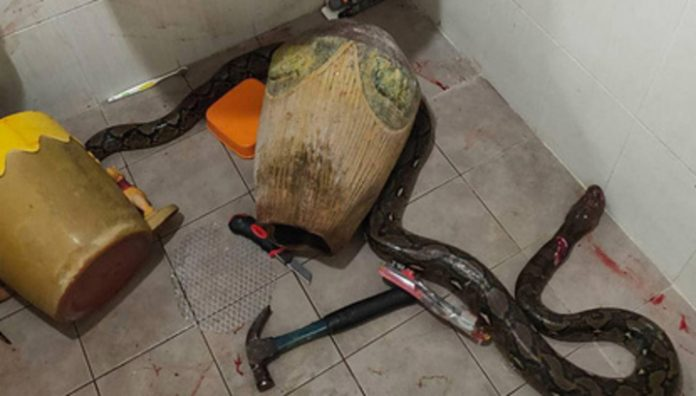 A woman came to the toilet, but I met the snake and joined her in the fight for life