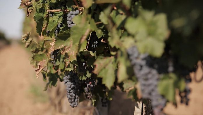 In Russia changed the rules of production and sale of wine