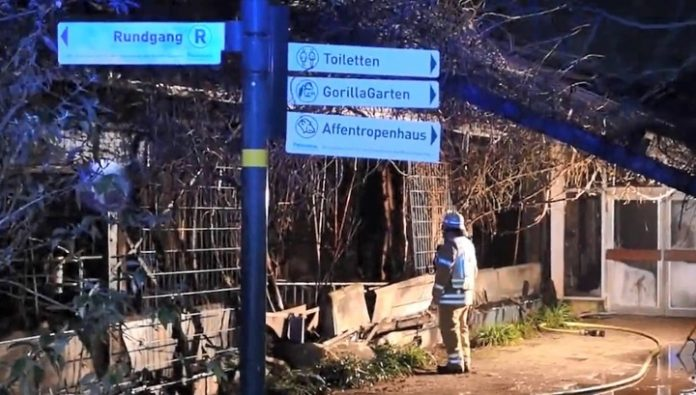 More than 30 animals were burned in a German zoo new year's eve