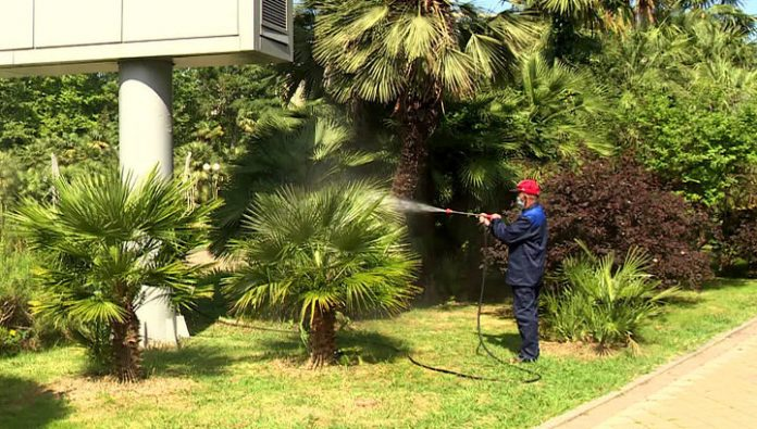 On the suppression of threat to palm pests told Sochi scientists