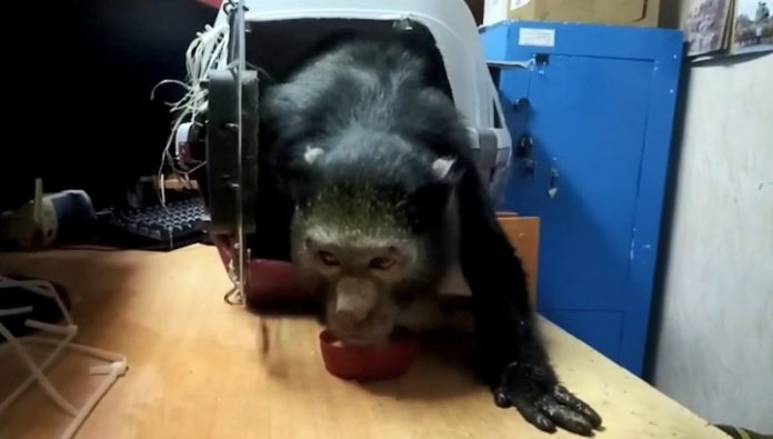 Police seized the Dagestani little lion cub and a monkey with a suspected stroke