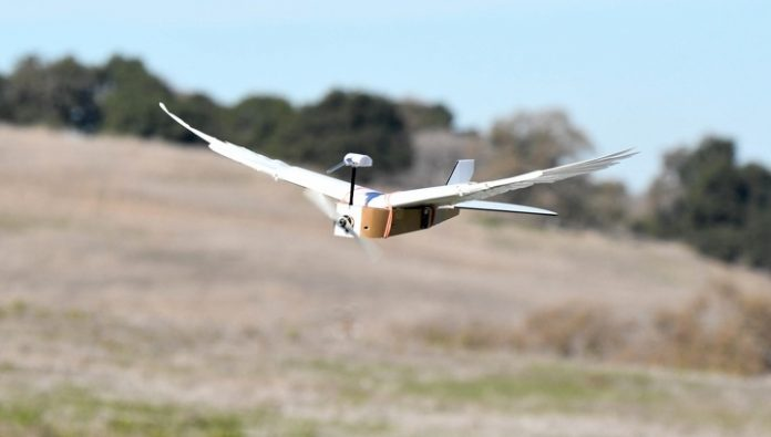Robot got the plumage of the dove and now flies like a bird