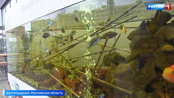 The aquarium in the cold: the inhabitants of the city are outraged by the