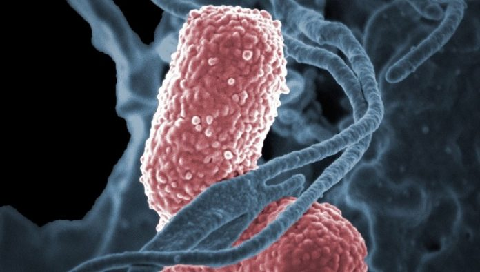 The effects of antibiotic treatment will resolve a relative of dangerous bacteria