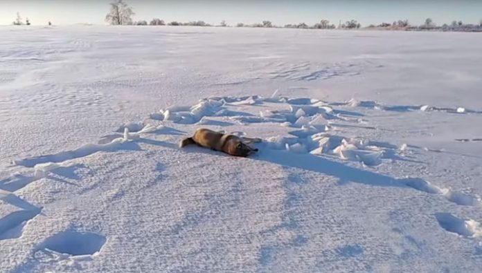 The Kirov Deputy suspect in the murder of two hunting dogs