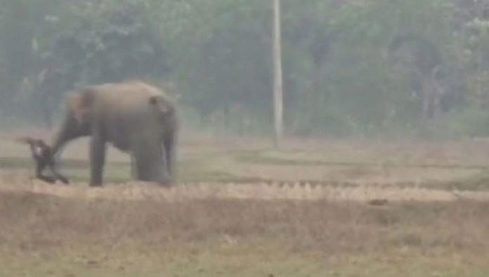 Tourists want to take a selfie with an elephant, but nearly got trampled. Video