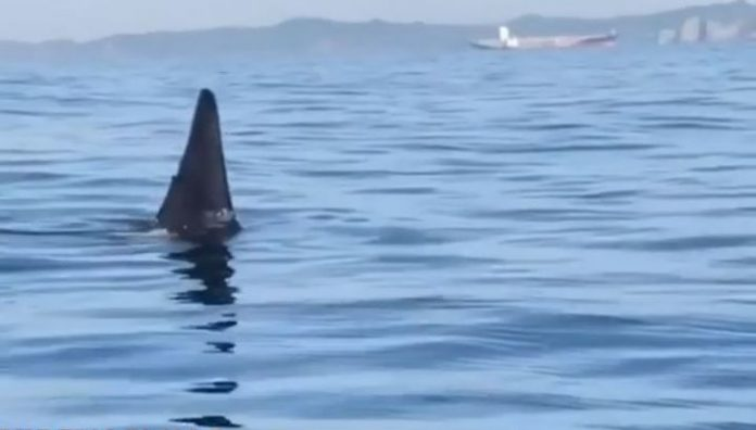 Eyewitnesses took video of the meeting with the whale off the coast Discoveries