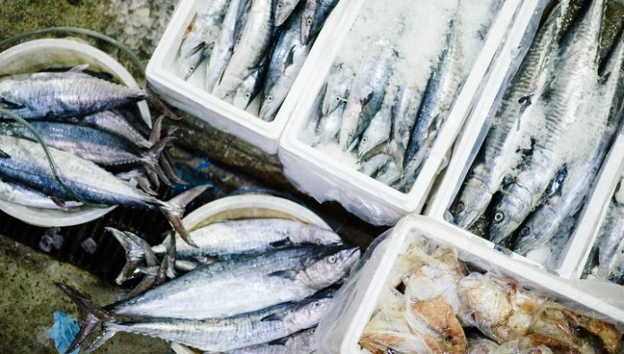 Global demand for fresh fish has decreased, and canned - rose