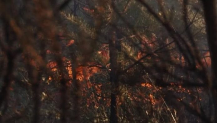 In the Baikal-Lena reserve a localized fire on the area of 11 hectares