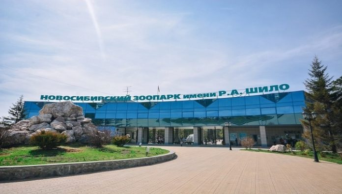 Novosibirsk zoo will resume under new rules