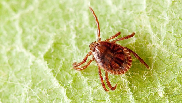 Parasitology: ticks with Lyme disease is throughout Russia