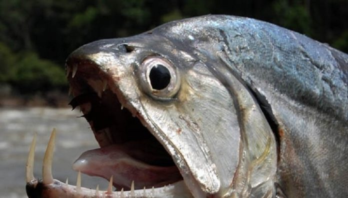 Traces of an underwater monster scared the South Ural fishermen