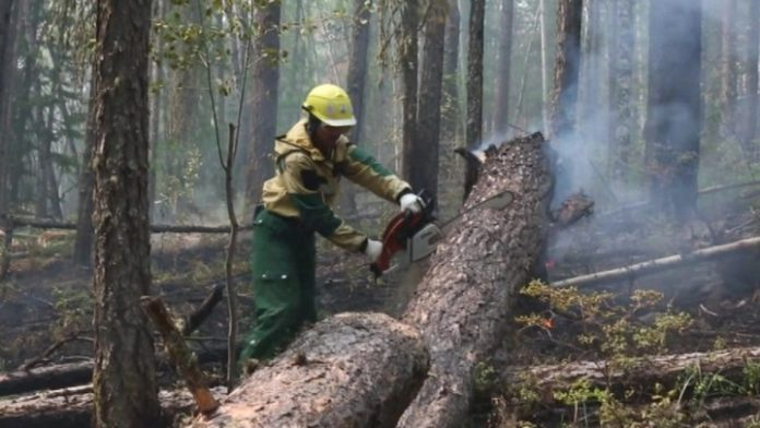 Suppression of forest fires in Yakutia attracted parachutists